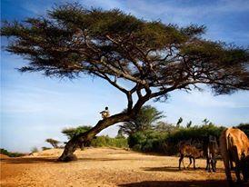 16 Days Ethiopia Bird-watching Holiday Tour.