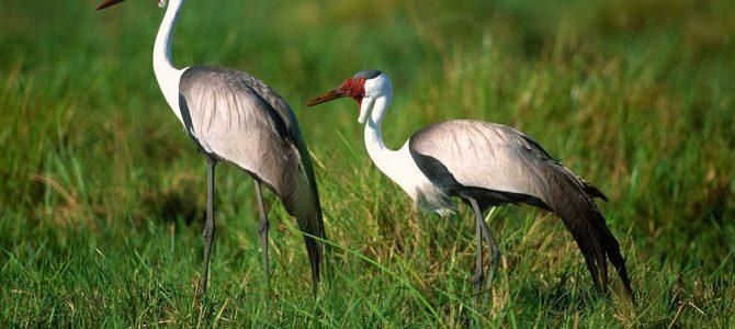 19 Days bird watching tour to Ethiopia